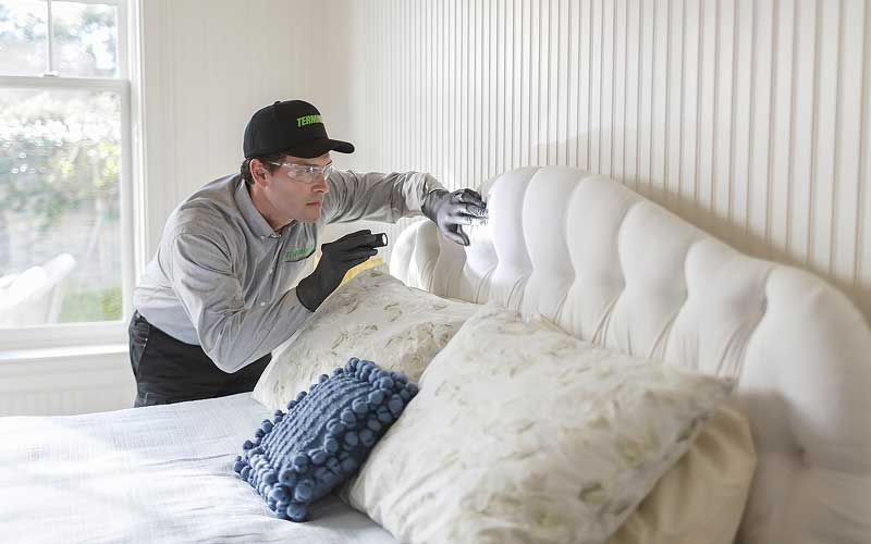 How Much Does Bed Bug Removal Cost? Compare Bed Bug Removal Service Price Quotes and Average Costs