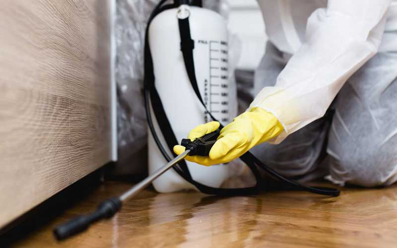 How Much Does Roach Extermination Services Cost? - Price Comparison Advisor Compare Roach Extermination Service Price Quotes and Average Costs