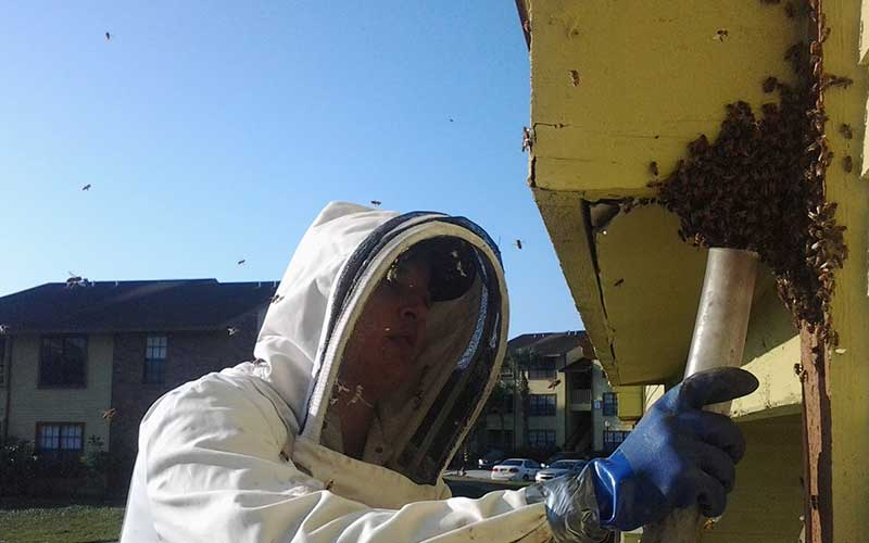 How Much Does Bee Hive Removal Cost? Compare Bee hive Removal Service Price Quotes and Average Costs