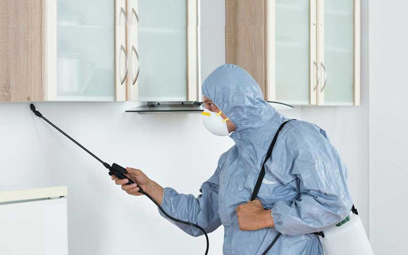 How Much Does A Rodent Exterminator Cost? Compare Rodent Extemrinator Services and Average Costs